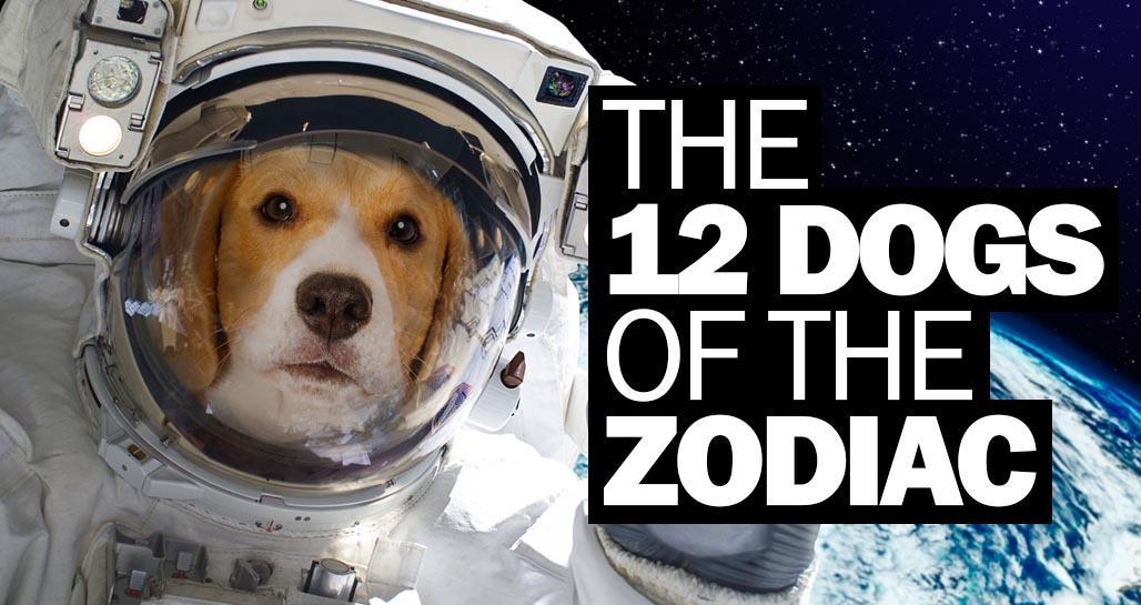 Zodiac dogs