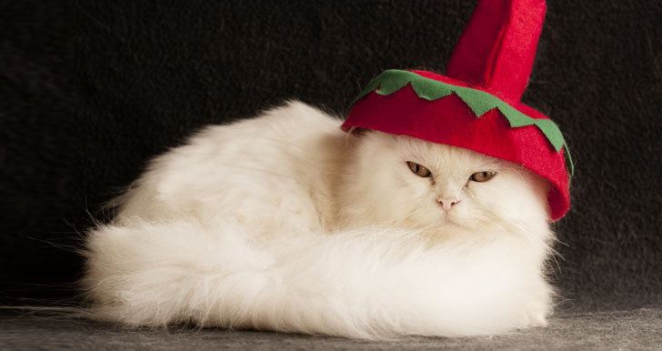Cat In Silly Hat