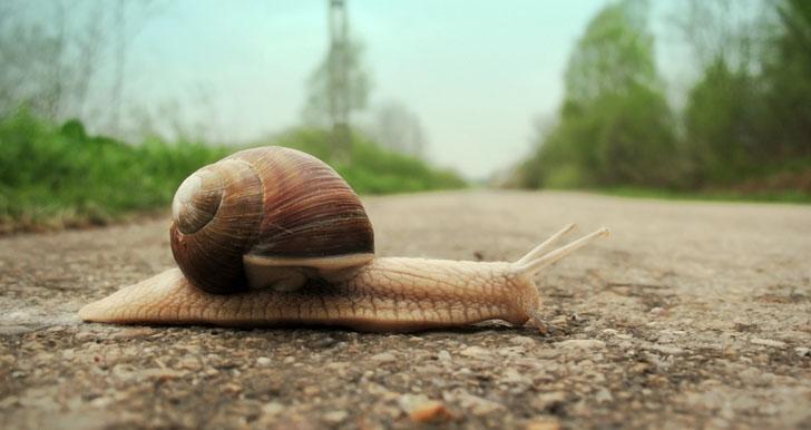 Slow Snails Pace