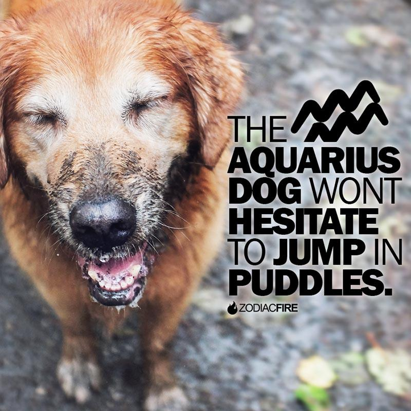 The Aquarius will jump in puddles