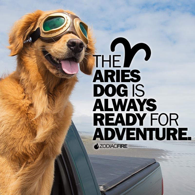 The Aries dog loves adventure